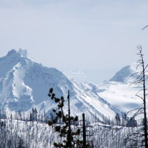 Cascade Mountain Range Oregon 295