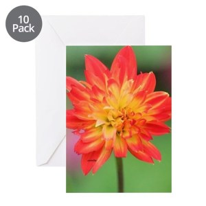 Colorful Dahlia Bud Opening 052 Greeting Cards pk of 10