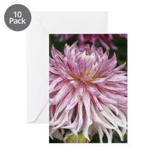 Colorful Dahlia Flower 218 Greeting Cards pk of 10