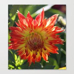 Fire In The Sky Dahlia Flower Canvas Print