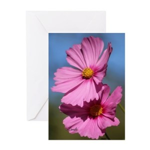 Pink Cosmos Bloom Greeting Cards