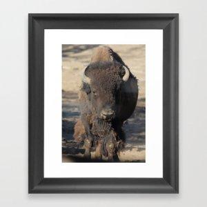 Bison Of The West Framed Art Print