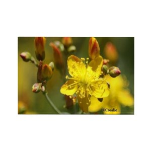 Central Oregon Wild Flowers Rectangle Refrigerator Magnet