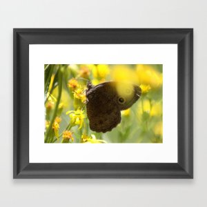 Colorful Common Wood-nymph Butterfly Framed Art Print
