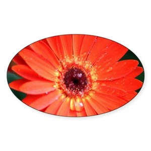 Colorful Red Chrysanthemum Flower Decal Sticker Oval