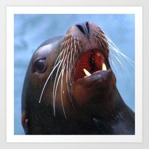 Micky The Wild Sea Lion Art Print