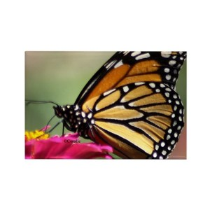 Monarch Butterfly Rectangle Refrigerator Magnet