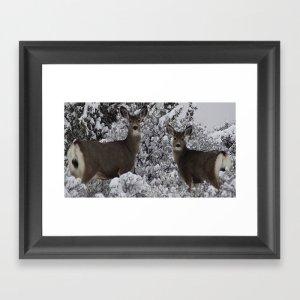 Mule Deer in the Oregon Snow Framed Art Print