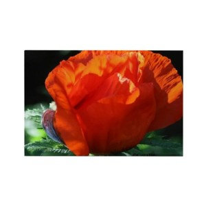 Oregon Poppy Flower Bloom Rectangle Refrigerator Magnet