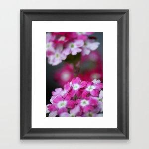 Pink White Verbena Flowers Framed Art Print
