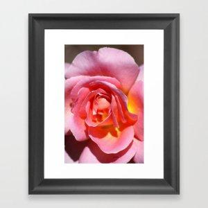 Pink Yellow Rose Flower Framed Art Print