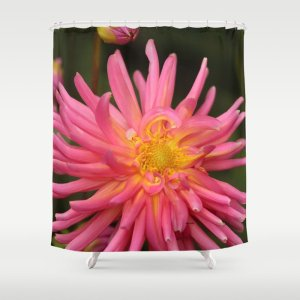 dahlia flower in the flower bed Shower Curtain