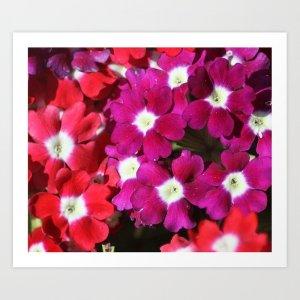 verbena flowers Art Print