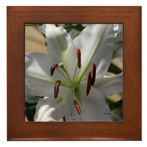 White Lily Flower Framed Tile