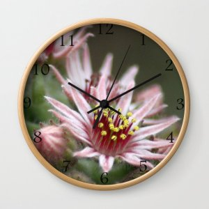 Hen and Chick Flower Wall Clock