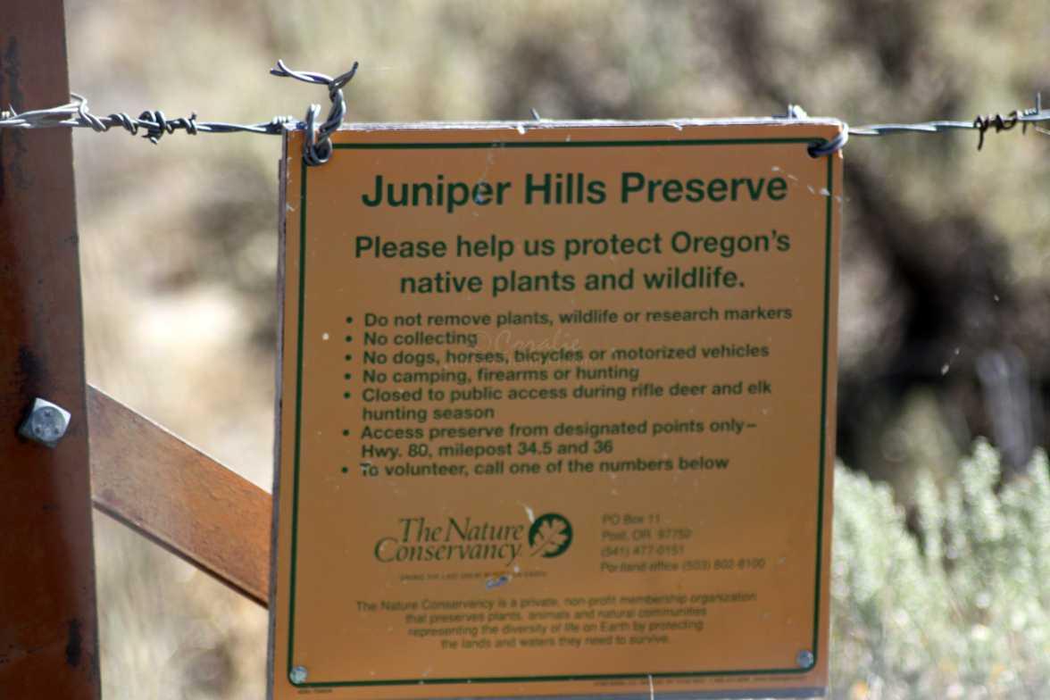 Juniper Hills Preserve Oregon 452