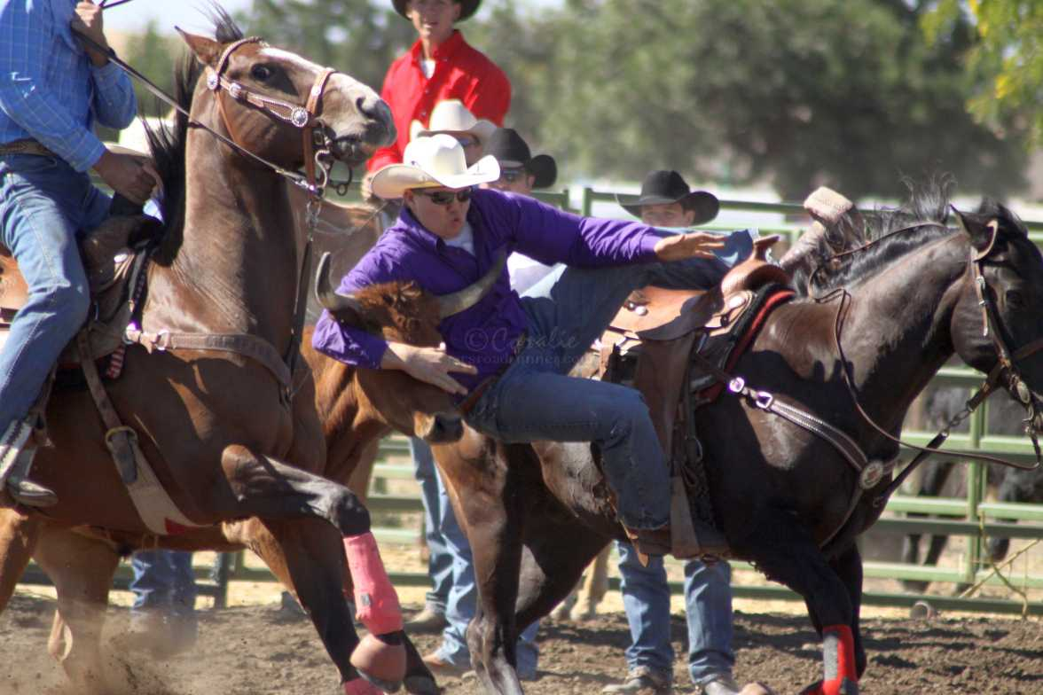 bulldogging rodeo 922