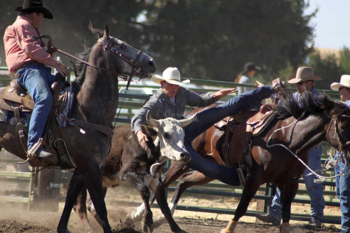 bulldogging rodeo 988