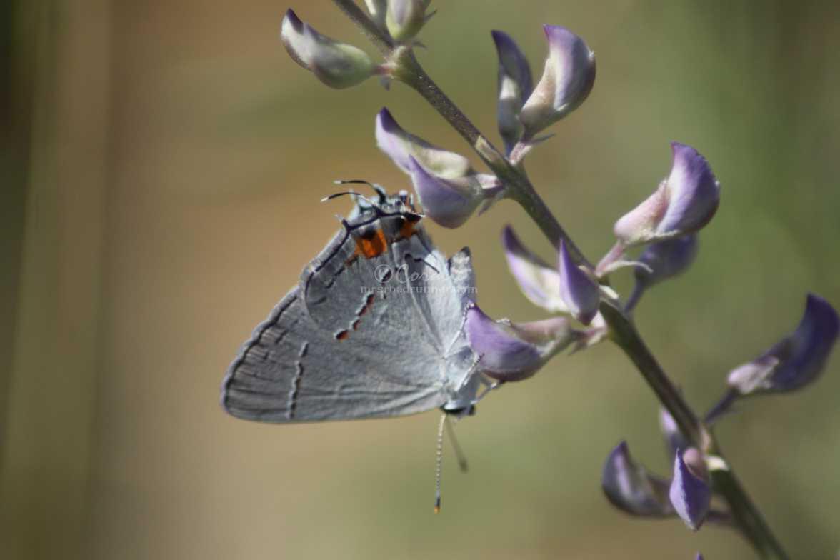 butterfly trickery 1991