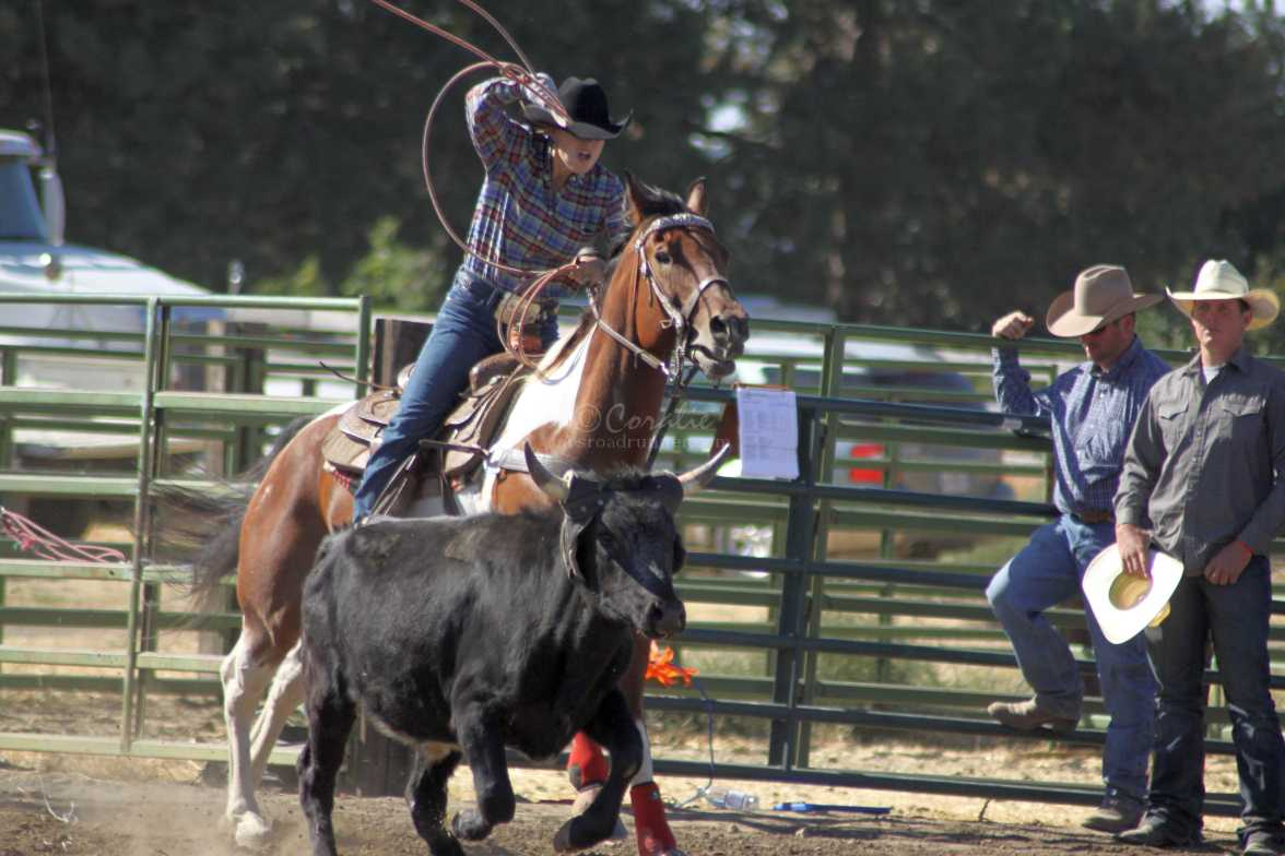 roping rodeo 1372