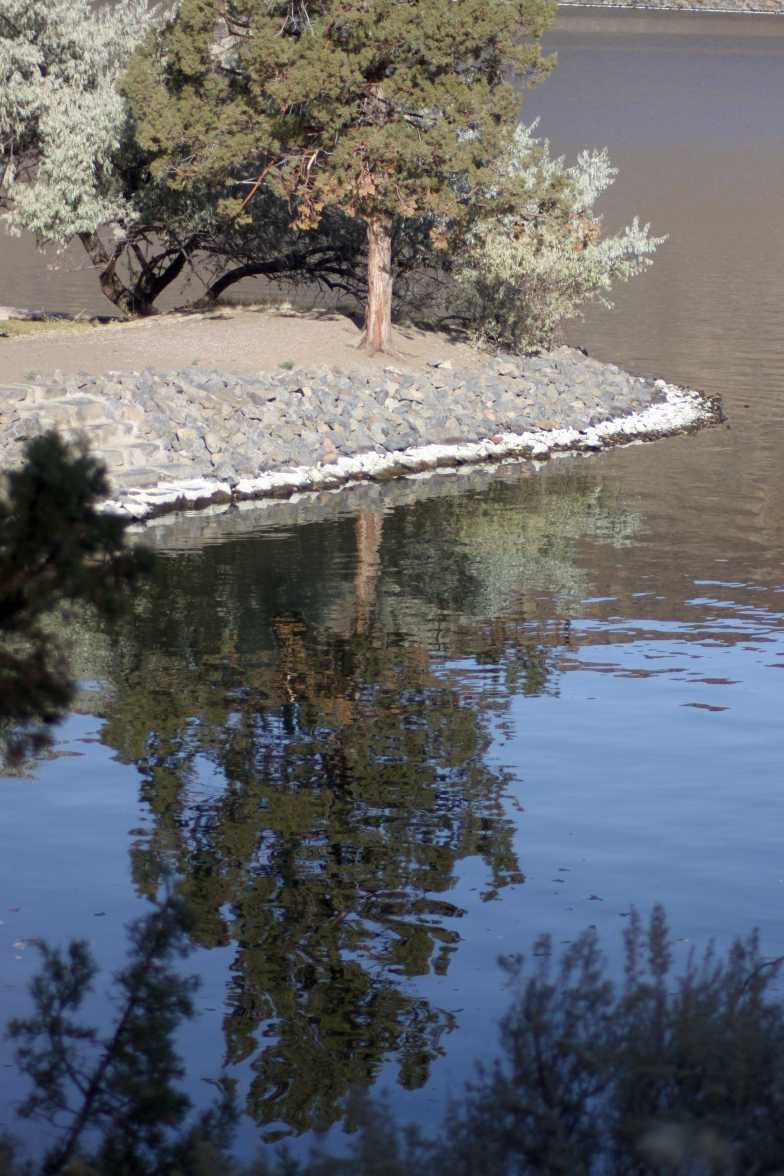 tree reflections 093