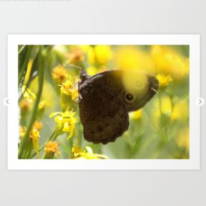 Colorful Common Wood-nymph Butterfly Art Print