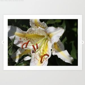 Flashy White Yellow Lily Flower Art Print