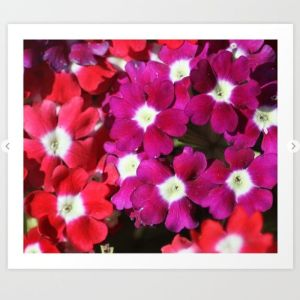 verbena flowers Art Print