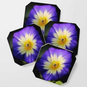 Dwarf Morning Flower Coasters