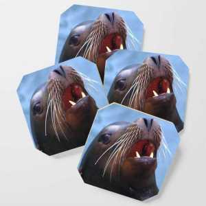 Micky The Wild Sea Lion Coaster