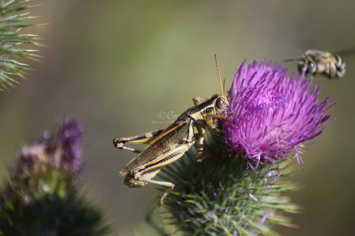 activity on a thistle flower