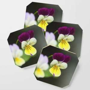 johnny jump up flower T38A1281 Coaster