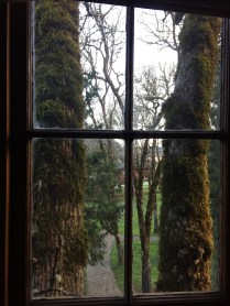The view from our treehouse.