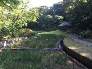 Emperor Meiji created this Iris garden for his wife, Empress Shoken.