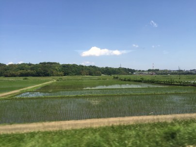 Rice fields from the bullet train from Osaka to Tokyo.