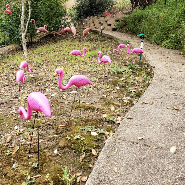 Flamingo Hill in Sheckyville is booming.