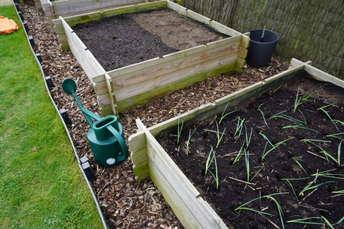 Pas gezaaide spinazie en pas geplante prei