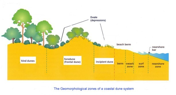 types of sand dunes diagram tool to create sequence index /geo/stockton/biophysical_interactions