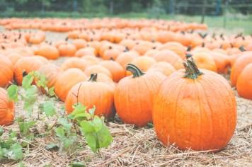 pumpkins-13