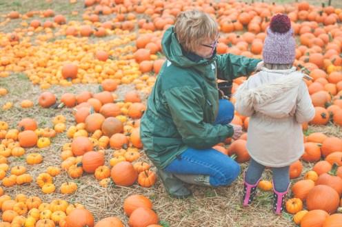 pumpkins-16