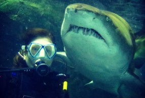 Shark Dive Xtreme Sydney