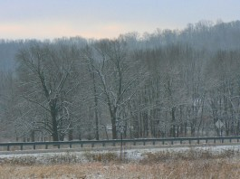 Color version of nearby trees across the highway. I can't decide whether I like it better with color or without.