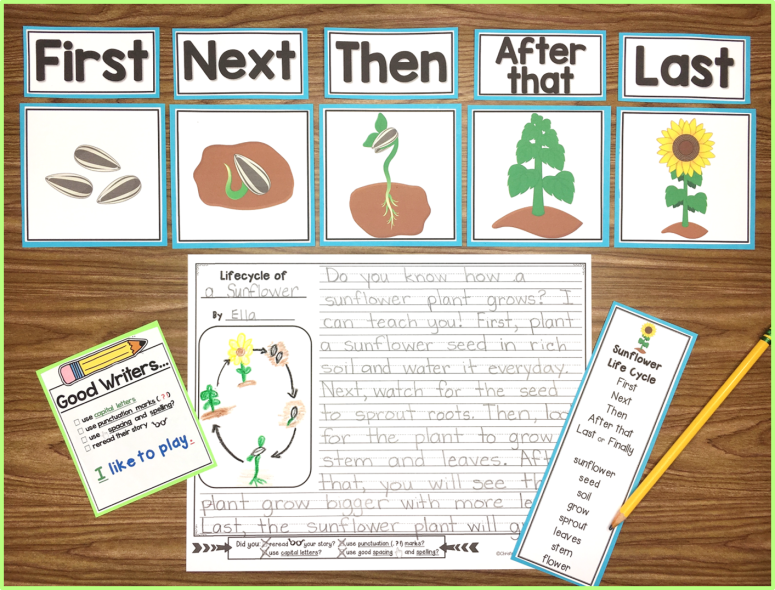 life cycle of sunflower writing