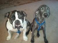 Newcastle and Stella