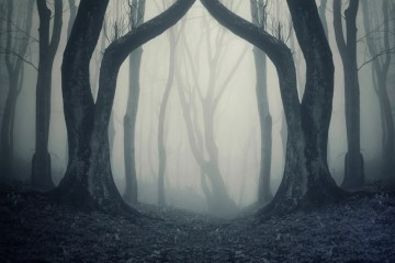 spooky foggy woods during halloween