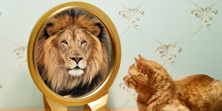 cat looking in a mirror and seeing a lion