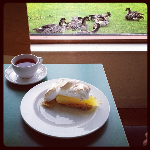 20120915 Goose pie