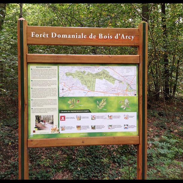 20120917 Forest run