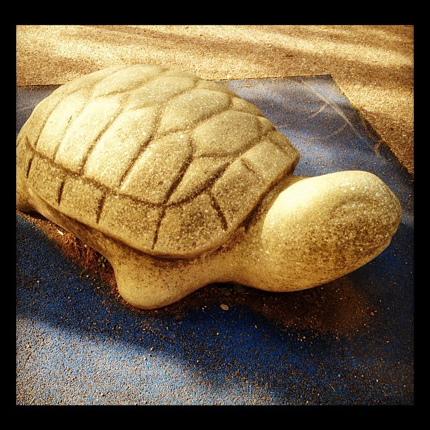 20120922 Turtle rest