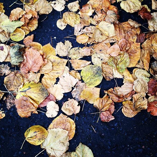 20121010 Urban leaves